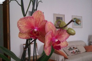 Inaspettata fioritura